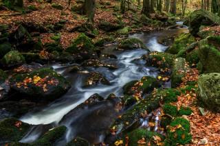 Kleine Ohe, Bayerischer Wald