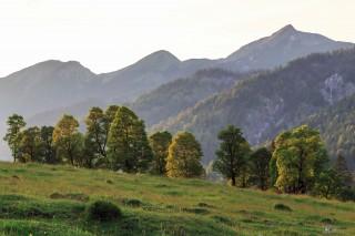 Ahornboden, Österreicher Alpen