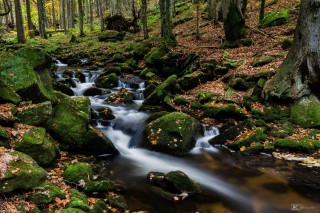 Kleine Ohe, Nationalpark Bayerischer Wald