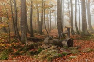 Lusen, Nationalpark Bayerischer Wald